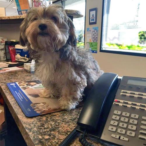Dog Day Care Boston Spa
