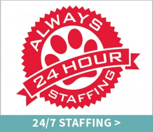 pet-resort-spa-247-staffing