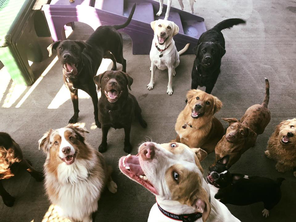 doggie daycare red dog pet resort spa With red dog daycare